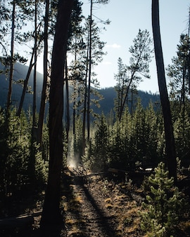 Caminho em uma floresta cercada por árvores sob a luz solar com montanhas