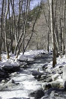 Caminho em uma floresta cercada por pedras e árvores cobertas de neve durante o dia
