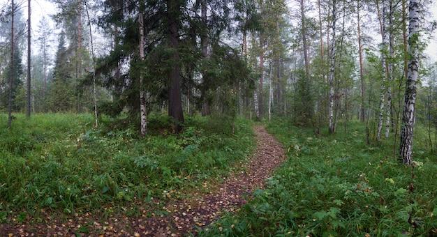 Caminho em uma floresta densa em uma manhã nublada