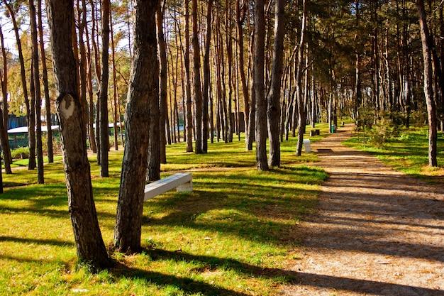 Caminho em uma floresta ensolarada de verão