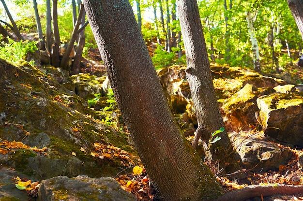 Caminho em uma floresta verde. área de conservação florestal. parque natural.
