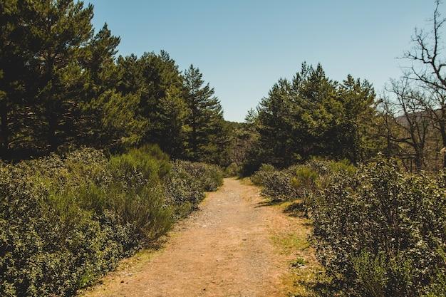 Caminho ensolarado no campo