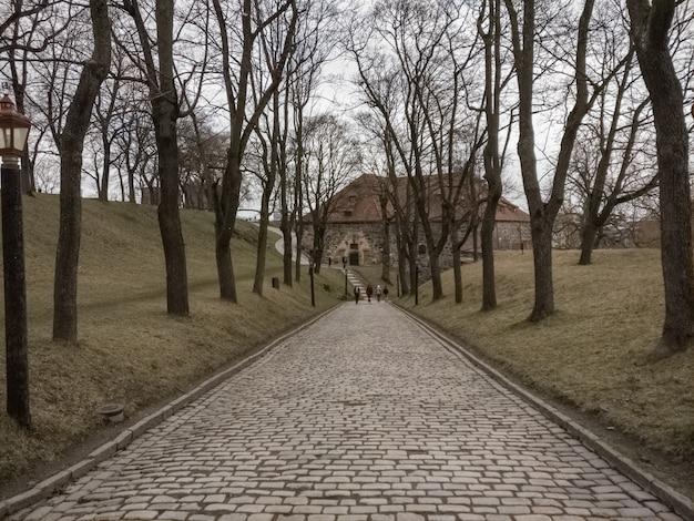 Caminho entre árvores sem folhas em um estado depressivo
