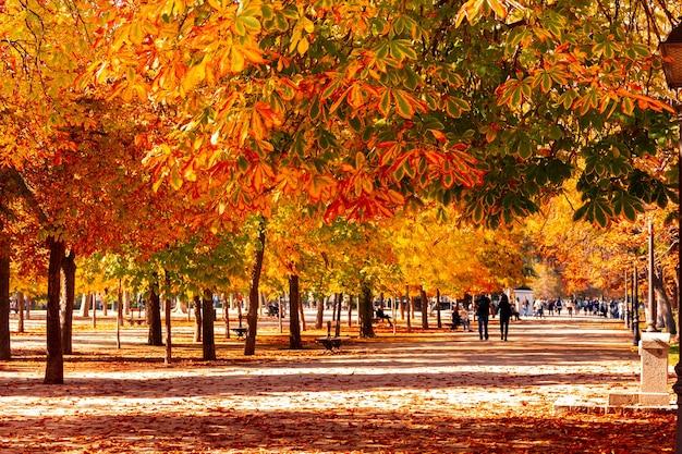 Caminho entre as árvores em um parque no outono. cores do outono.