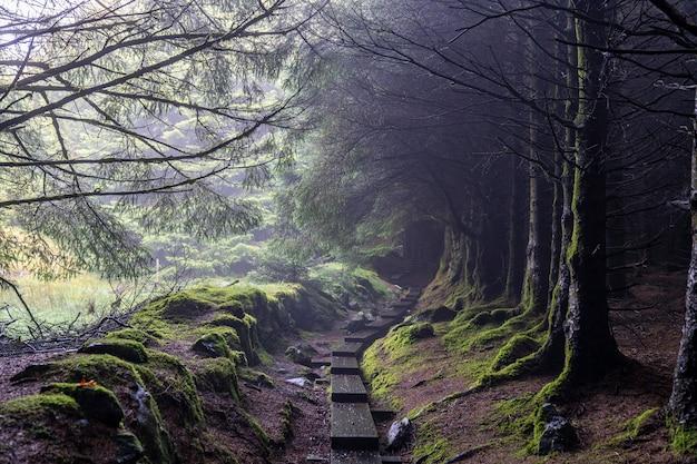 Caminho escuro com árvores sem folhas e um pouco de nevoeiro no caminho wicklow.