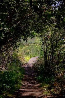 Caminho estreito atravessando uma floresta com grandes árvores de ambos os lados