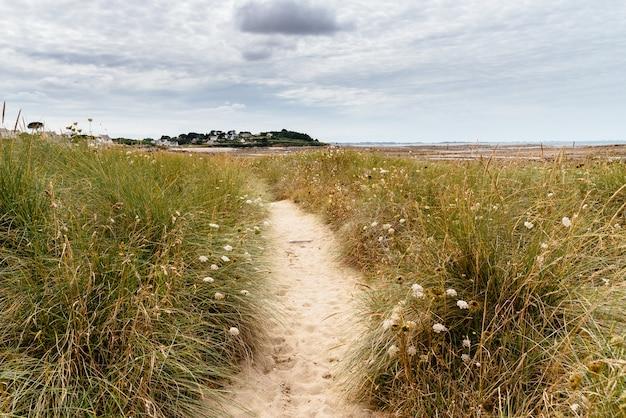 Caminho estreito de areia no campo com flores silvestres
