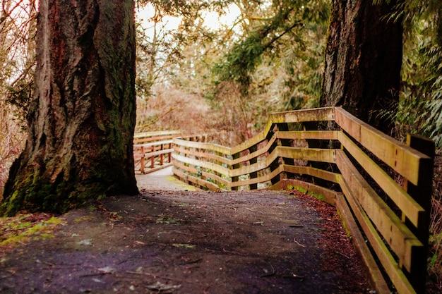 Caminho estreito em uma floresta com uma cerca de prancha de madeira