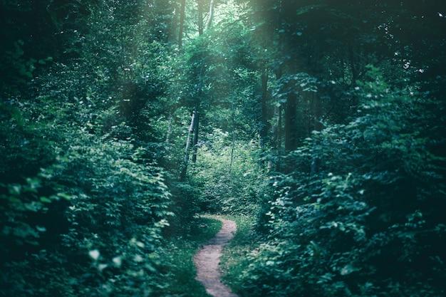 Caminho estreito em uma floresta escura, iluminada por raios solares.