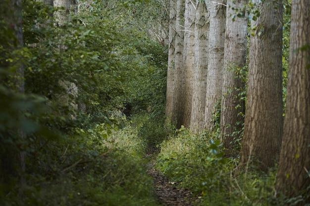Caminho estreito no meio de árvores e plantas verdes na selva