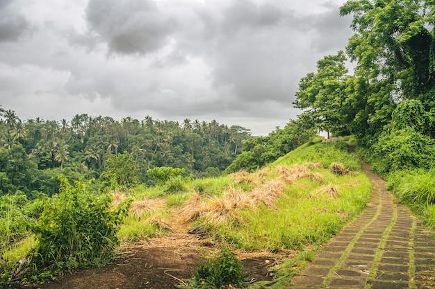 Caminho forrado de grama com uma bela vista de uma floresta de montanha em um dia nublado
