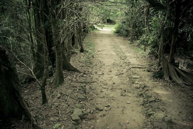 Caminho misterioso jogue a floresta. túnel de floresta tropical