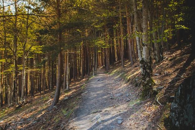 Caminho montanhoso sombrio