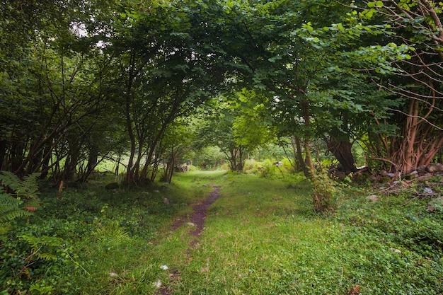 Caminho na floresta entre luz e sombra