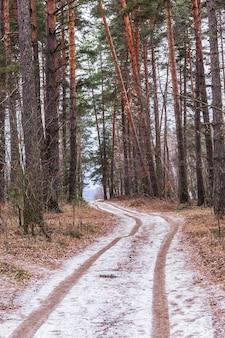 Caminho na floresta no início do inverno a primeira neve na estrada na floresta congelada
