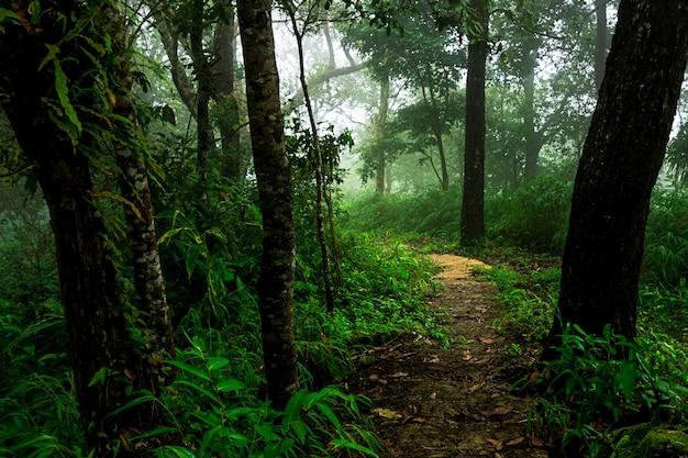 Caminho na floresta tropical e névoa