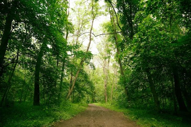 Caminho na floresta verde