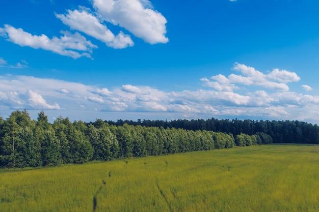 Caminho na grama do campo. paisagem pitoresca de verão do prado com nuvens na vista do céu azul maravilhoso. foto de estoque de campo verde de pastagem e floresta.