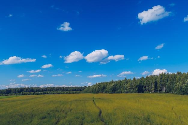 Caminho na grama do campo. paisagem pitoresca de verão prado com nuvens sobre fundo de vista do céu azul maravilhoso. foto de estoque de campo de pastagem verde.