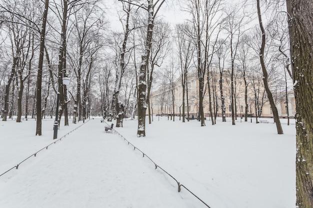 Caminho nevado no jardim mikhailovsky em são petersburgo, rússia.