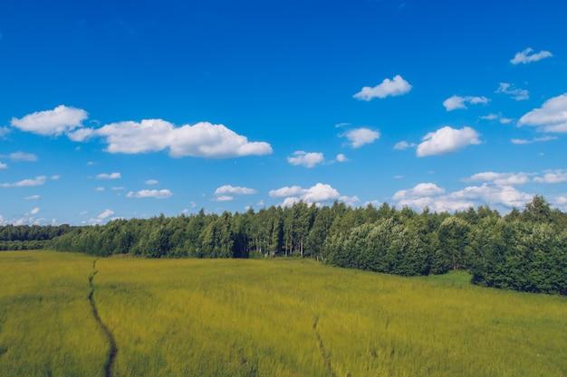 Caminho no campo de grama. paisagem pitoresca de verão prado com nuvens sobre fundo de vista do céu azul maravilhoso. foto de estoque de campo verde de pastagem e floresta.