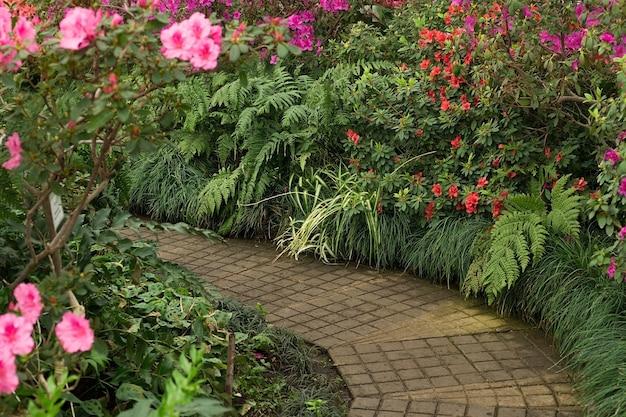 Caminho no jardim botânico, lindo fundo de primavera