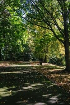 Caminho no meio das altas árvores de uma floresta