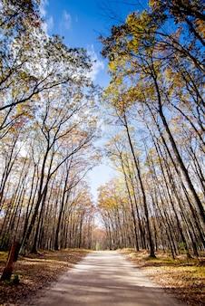 Caminho no meio de árvores altas, com um céu azul