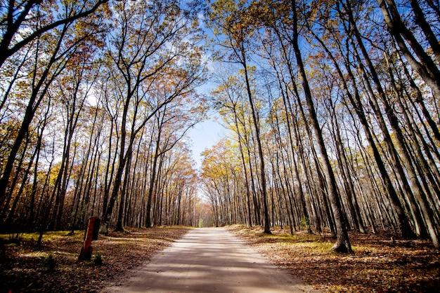 Caminho no meio de uma floresta com árvores altas sem folhas e um céu azul ao fundo