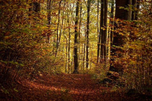 Caminho no meio de uma floresta com árvores de folhas amarelas e marrons durante o dia