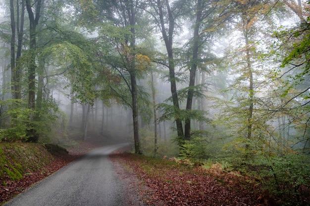 Caminho no meio de uma floresta de árvores coberta de nevoeiro