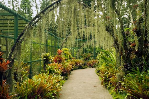 Caminho panorâmico sob arcos artificiais com plantação de flores de orquídea