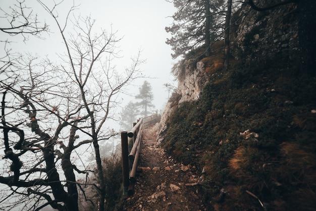 Caminho para o topo da floresta