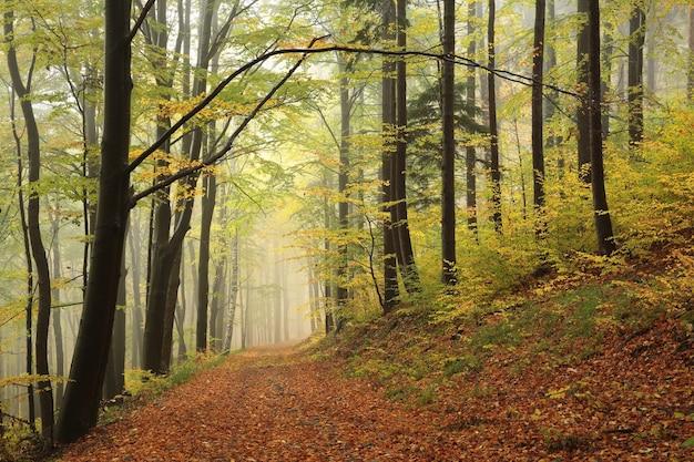 Caminho pela floresta de outono em um clima nebuloso