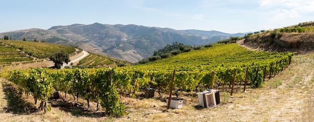 Caminho pelas vinhas em portugal