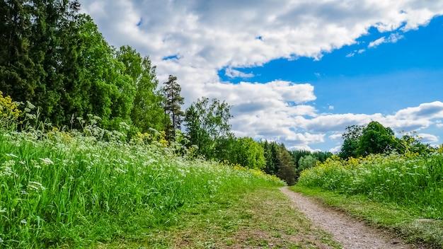 Caminho pelo campo. prado alpino, paisagem atmosférica de natureza majestosa. paisagem cênica. maravilhosa paisagem selvagem.