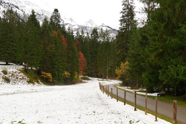 Caminho que conduz pela floresta de inverno nos alpes allgeau, alemanha