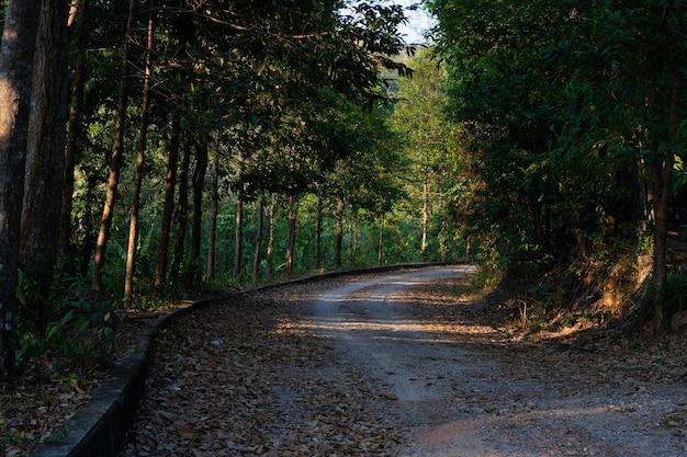 Caminho rural