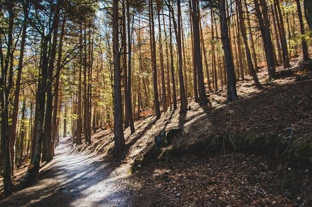 Caminho sombrio na floresta