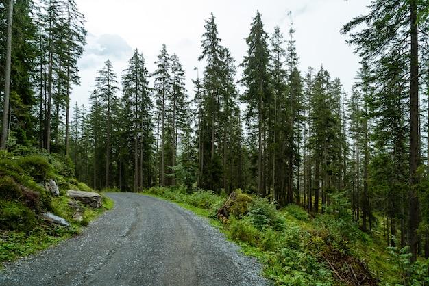 Caminho vazio com floresta e nevoeiro