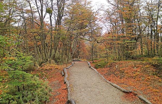 Caminho vazio entre a folhagem colorida de outono no parque nacional tierra del fuego, ushuaia, patagônia, argentina, américa do sul