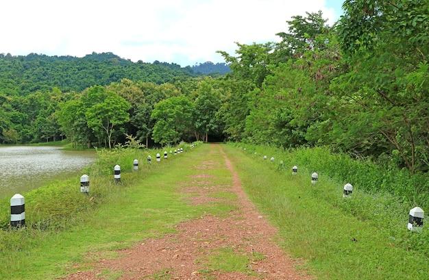 Caminho vazio que leva à floresta luxuriante