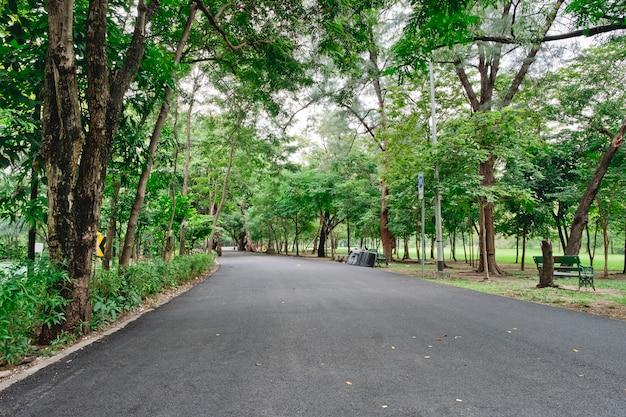 Caminhos com árvores verdes, paisagismo no jardim