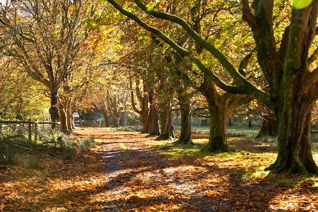 Caminhos para caminhar até a paisagem montanhosa, cader idris, país de gales, reino unido