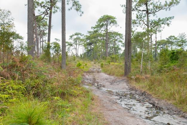 Caminhos selvagens na floresta