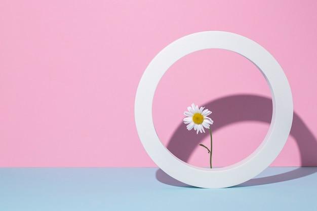 Camomila em uma moldura branca redonda, pódio de apresentação em um fundo rosa-azulado.