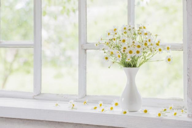 Camomila em vaso no peitoril da janela