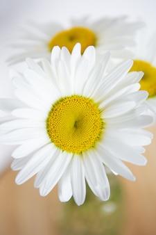 Camomila flores em um vaso em uma mesa de madeira. vista plana leiga, superior.