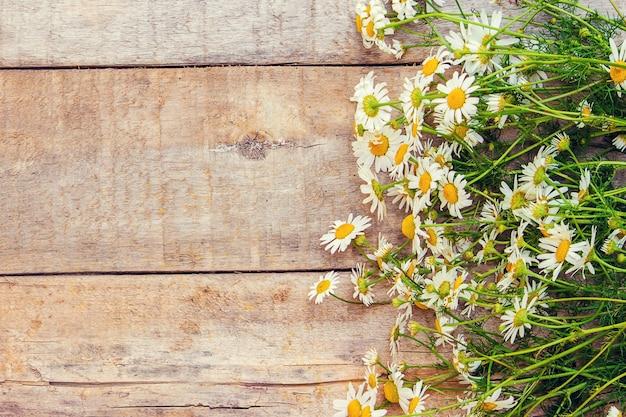 Camomila, uma tag. ervas medicinais. foco seletivo.