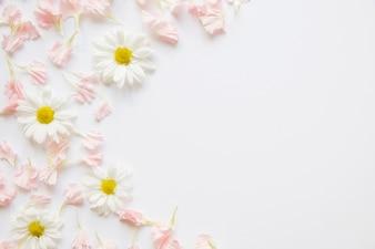 Camomilas e pétalas cor de rosa